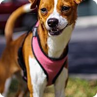 Adopt A Pet :: Dudley - Jupiter, FL
