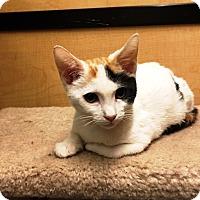 Adopt A Pet :: Winnie - Riverside, CA