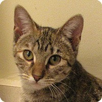 Adopt A Pet :: Tinkerbell - Berkeley Hts, NJ