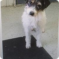 Adopt A Pet :: Peyton - Clarksville, TN