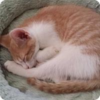 Adopt A Pet :: Rio - Pottstown, PA