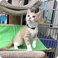 Adopt A Pet :: Farkas - Warren, OH