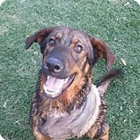 Adopt A Pet :: Bronson - Phoenix, AZ