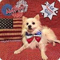 Adopt A Pet :: Happy 2016 - Dallas, TX