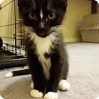 Adopt A Pet :: Tips - Fort Collins, CO