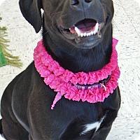 Adopt A Pet :: Lola - Chambersburg, PA