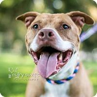 Adopt A Pet :: Rebel - Reisterstown, MD