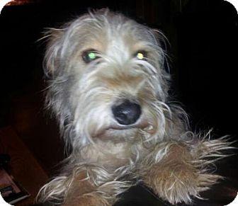 Terrier (Unknown Type, Medium) Mix Dog for adoption in Wagoner, Oklahoma - Hayley