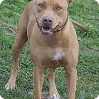 Adopt A Pet :: Allie - Bedford, IN