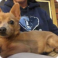 Adopt A Pet :: SHEBA - PARSIPPANY, NJ