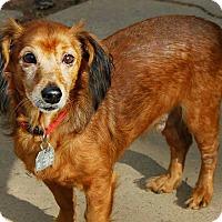 Adopt A Pet :: Max - Shreveport, LA
