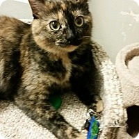 Adopt A Pet :: TRIXIE - Highland, IN