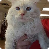 Adopt A Pet :: Sky - Gadsden, AL