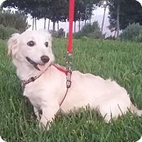 Adopt A Pet :: Alubia - La Jolla, CA