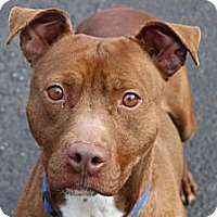 Adopt A Pet :: Killian - Port Washington, NY