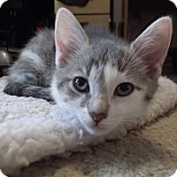 Adopt A Pet :: Amy - Colmar, PA