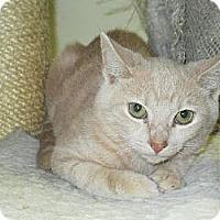 Adopt A Pet :: Ricky - Centreville, VA