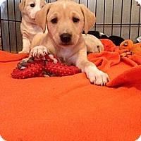 Adopt A Pet :: Tanner - Memphis, TN