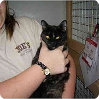 Adopt A Pet :: Tango - Jacksonville, FL