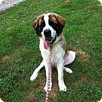 Adopt A Pet :: Picasso - Dandridge, TN
