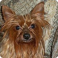 Adopt A Pet :: Leah - Lorain, OH