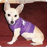 Adopt A Pet :: Lucia - Mooy, AL
