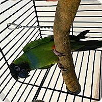 Adopt A Pet :: Ollie - Punta Gorda, FL