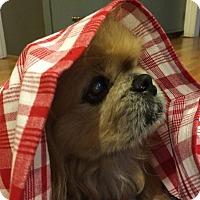 Adopt A Pet :: Henry - Virginia Beach, VA