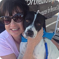 Adopt A Pet :: Shorty - Scottsdale, AZ