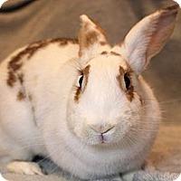 Adopt A Pet :: Ella - Hillside, NJ
