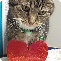 Adopt A Pet :: Muffin - Queenstown, MD