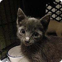 Adopt A Pet :: Juniper - East Brunswick, NJ
