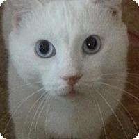 Adopt A Pet :: Francis - Philadelphia, PA