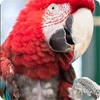 Adopt A Pet :: Julio - Denver, CO