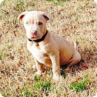 Adopt A Pet :: Chuck-pending adoption - Manchester, CT