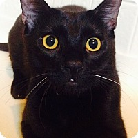 Adopt A Pet :: Bruno - Modesto, CA