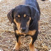 Adopt A Pet :: Tattoo - Enfield, CT