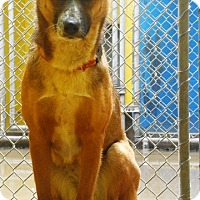 Adopt A Pet :: Indy - Redding, CA