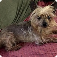Adopt A Pet :: Milly in Alabama - Lansing, MI