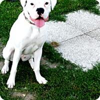 Adopt A Pet :: Luna Lee-Adopted! - Turnersville, NJ