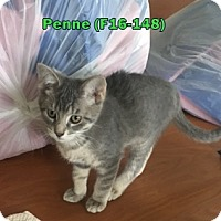 Adopt A Pet :: Penne - Tiffin, OH