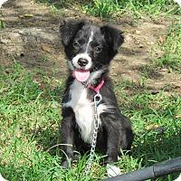 Adopt A Pet :: TESSY - Bedminster, NJ