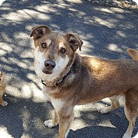 Adopt A Pet :: Rusty - Roslyn, WA