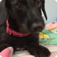 Adopt A Pet :: Geneva - Weston, FL