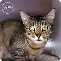 Adopt A Pet :: Crissy - Lyons, NY