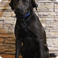 Adopt A Pet :: Thomas - Waldorf, MD