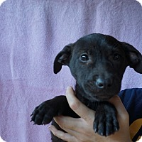 Adopt A Pet :: Rose - Oviedo, FL