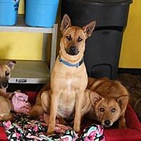 Adopt A Pet :: Busy - Phoenix, AZ