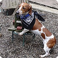 Adopt A Pet :: BENTLEE - Portland, OR