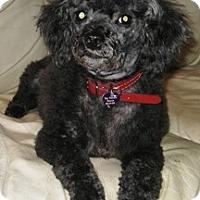 Adopt A Pet :: Travis - Dover, MA